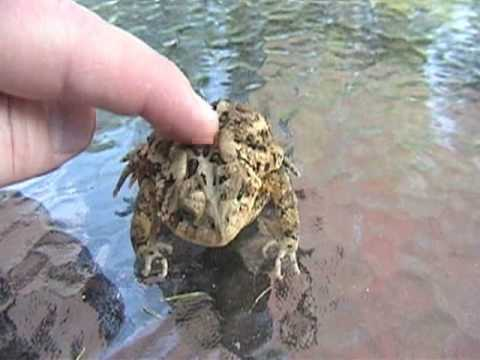 Toad petting (cute?)
