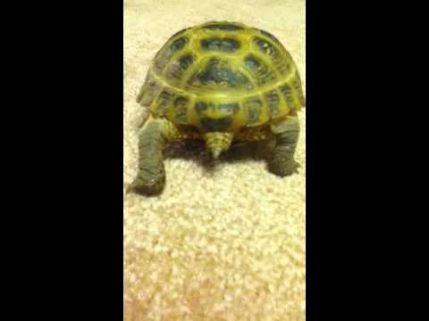 Turtle poop (kids laughing at him! Stop bullying!)