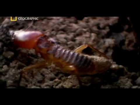 ANTS VS TERMINTES BRAWL