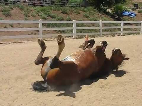Horse Fart Vid